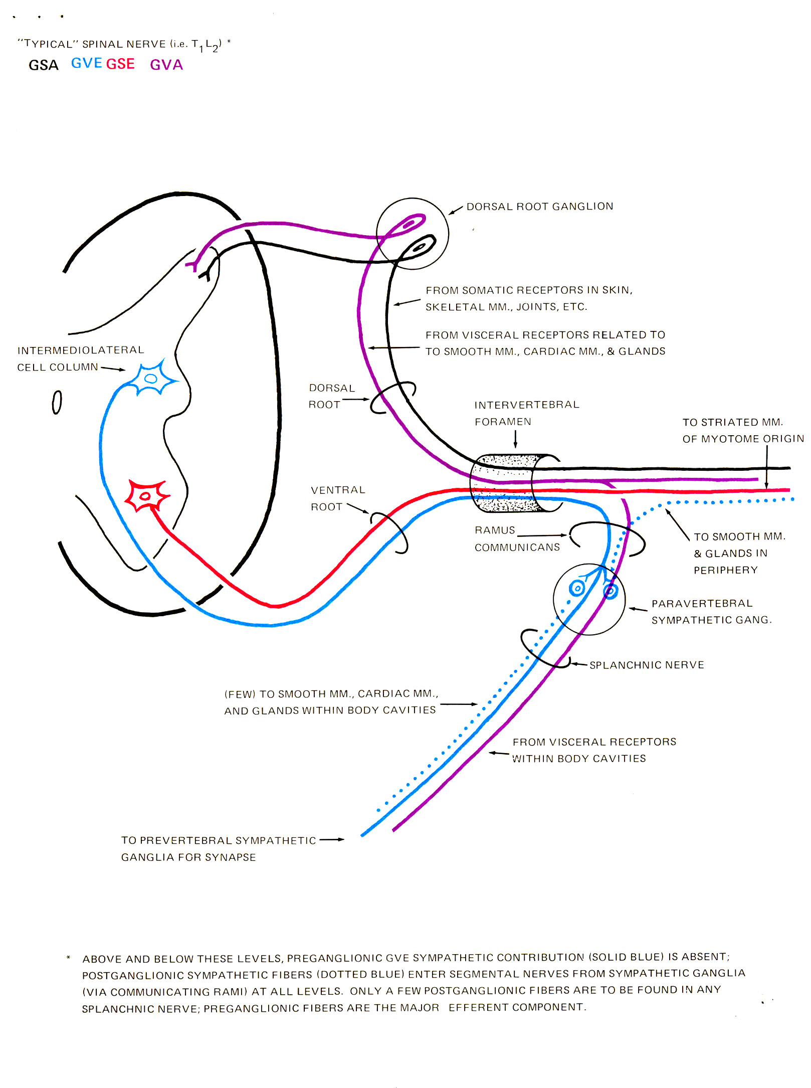 Brachial Plexus Injuries At Birth  ErbS Palsy Legal Help